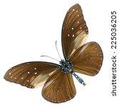 striped blue crow butterfly ... | Shutterstock . vector #225036205