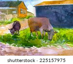 Cow And Young Bull On Grass...