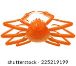 Snow Crab Illustration
