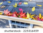 Colorful Fall Leaves In The...