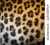 Real Jaguar Skin