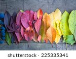 autumn leaves and berries ... | Shutterstock . vector #225335341