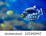 Underwater Image Of Colorful...