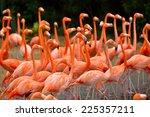 Close Up Of Caribbean Flamingo...