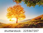majestic alone beech tree on a... | Shutterstock . vector #225367207