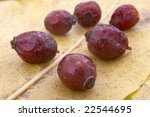close up of dried rose hip on... | Shutterstock . vector #22544695