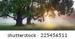panorama of bench under old oak ... | Shutterstock . vector #225456511