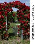 Stock photo roses on a garden door 225456877