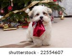 Cute Lhasa Apso Puppy At...