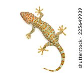 gecko isolated on white... | Shutterstock . vector #225649939