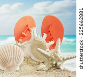 seashell on the beach | Shutterstock . vector #225662881