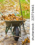 Cleaning The Fallen Leaves In...
