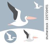 Pelican. Vector Illustration