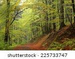 Trail Through The Autumnal...