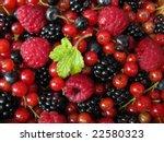 wild fruits redcurrant ... | Shutterstock . vector #22580323