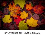 Autumnal Colorful Fallen Leaves