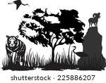 Tiger And Wild Argali Black...