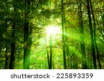 Fresh Green Forest With...