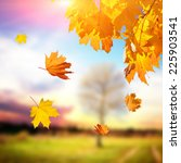 the colorful foliage in the... | Shutterstock . vector #225903541