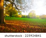 colorful foliage in the autumn... | Shutterstock . vector #225924841