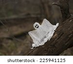 Funny Ghost On The Tree Log In...