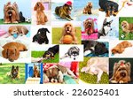 collage of pretty dogs | Shutterstock . vector #226025401