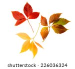 high resolution autumn leaves... | Shutterstock . vector #226036324