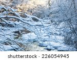 Snowy Tree  Branches At Winter