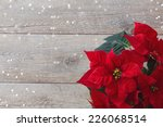 Christmas Flower Poinsettia...