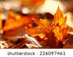 texture of yellow leaves on the ... | Shutterstock . vector #226097461