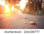 Yellow Leaves On An Asphalt...