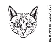graphic drawing of a cat head... | Shutterstock .eps vector #226147624