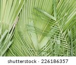 Pile Of Palm Leaf