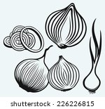 red onion bulb and rings. fresh ...