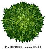 illustration of an ashoka tree...