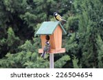The Birds Titmouse Feeding On A ...