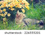 Cute Cat Relaxing Outdoor On...