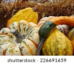 Gourds On The Farm