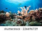 hard coral   Shutterstock . vector #226696729
