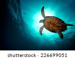 turtle swiming over divers | Shutterstock . vector #226699051