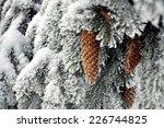 Snowy Fir Cone