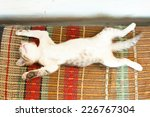 Stock photo small kitten sleeping on the bench 226767304