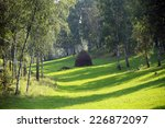 beautiful summer landscape... | Shutterstock . vector #226872097