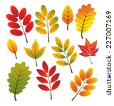 maple autumn leaves | Shutterstock .eps vector #227007169