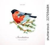 Watercolor Painting Bullfinch...