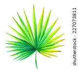 Fresh Palm Leaf Watercolor...