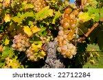 grape | Shutterstock . vector #22712284
