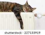 A Tiger  Tabby  Cat Relaxing O...
