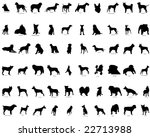 Stock vector biggest set of dogs silhouettes in different poses with breeds description almost each kind of 22713988