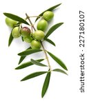 branch of olive tree with green ... | Shutterstock . vector #227180107